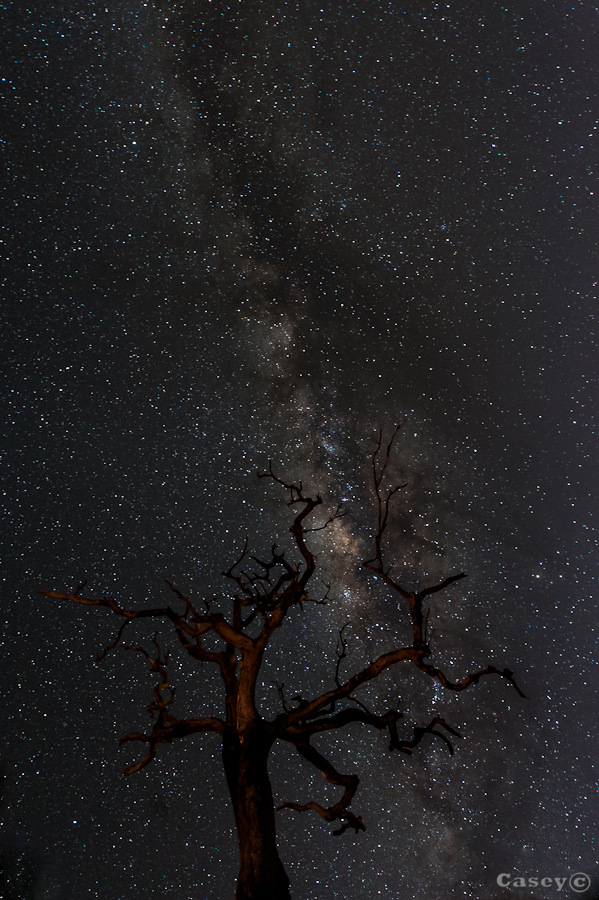Branching out to the universe
