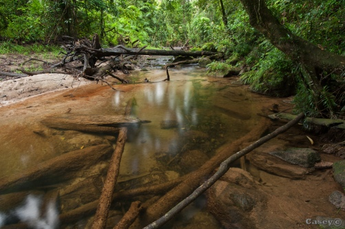 clear rainforest stream