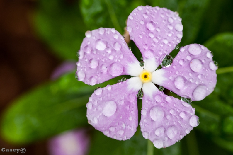 Rain bring beauty to natures form