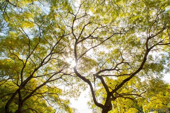 canopy glow