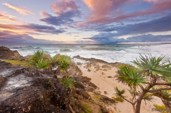 tropical pandannas beach sunrise