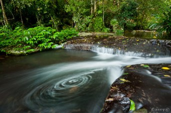 rainforest vortex