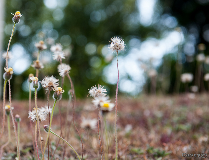 bokeh background weeds