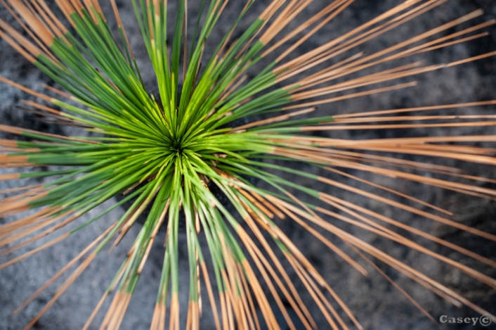 abstract grass tree