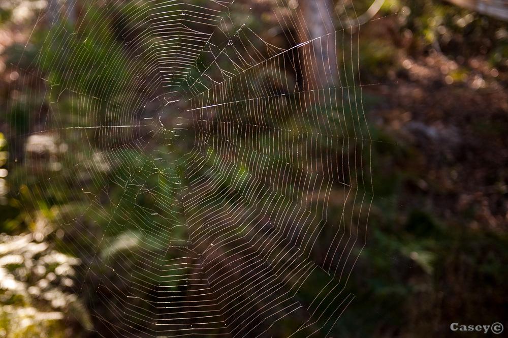 spider web complete