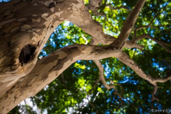bokeh, tree