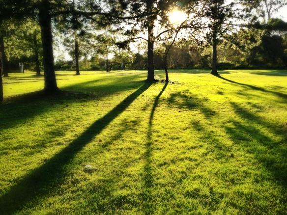 green shadows trees