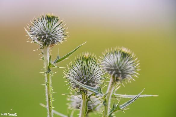 weeds bokeh