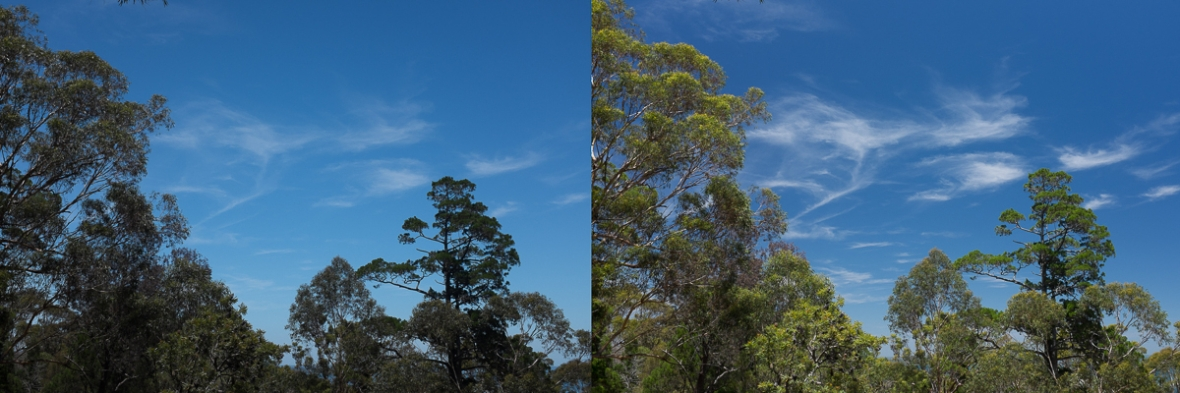 Australian bush view with and without