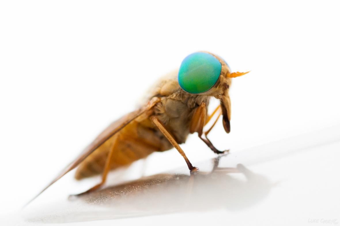 mega bug