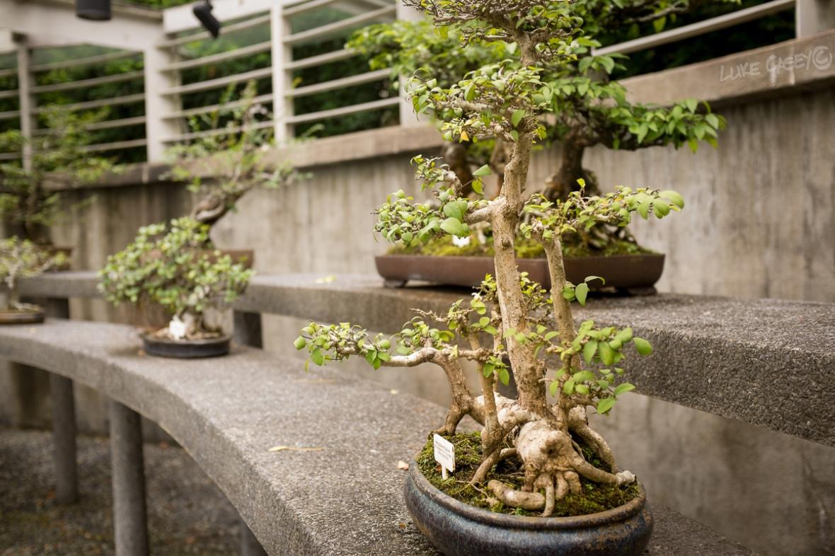 Bonsai garden 1