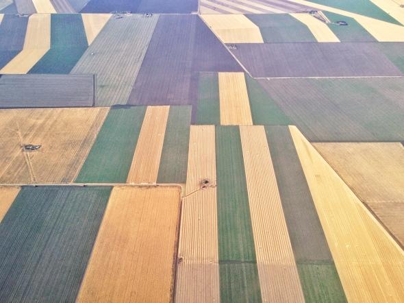 farm field of dreams